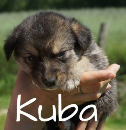 Pies do adopcji - Kuba