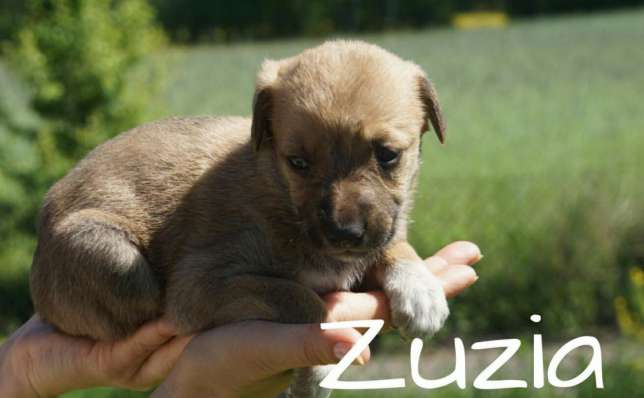 Sunia do adopcji - Zuzia