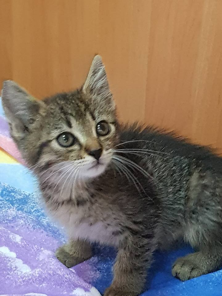 Kot do Adopcji FILIPEK