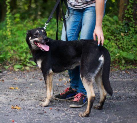 Sunia do adopcji - Przytulisko Pionki - Fundacja PTOnZ