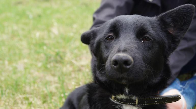 Psy do adopcji - Luna sunia