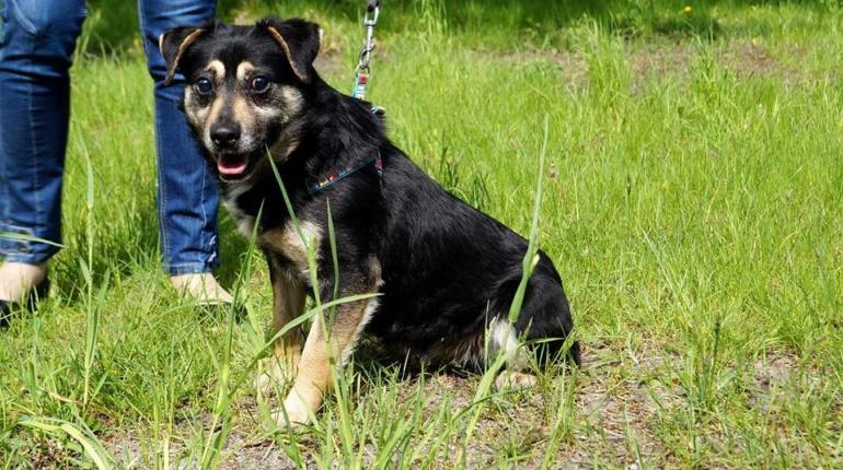 Psy do adopcji Pionki