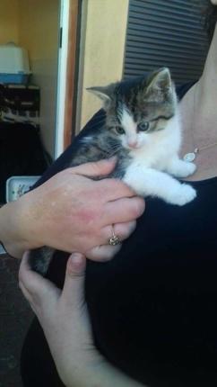Kontakt w sprawie adopcji kotków 601-858-580 KULECZKI