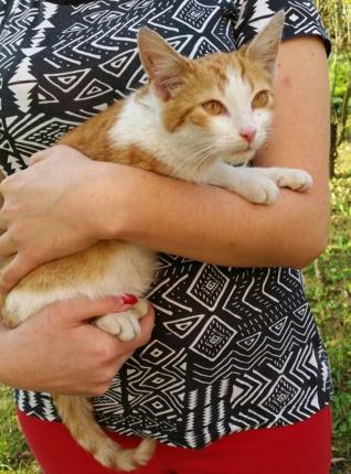 Koty do adopcji 601-858-580 - Kotek Boruc