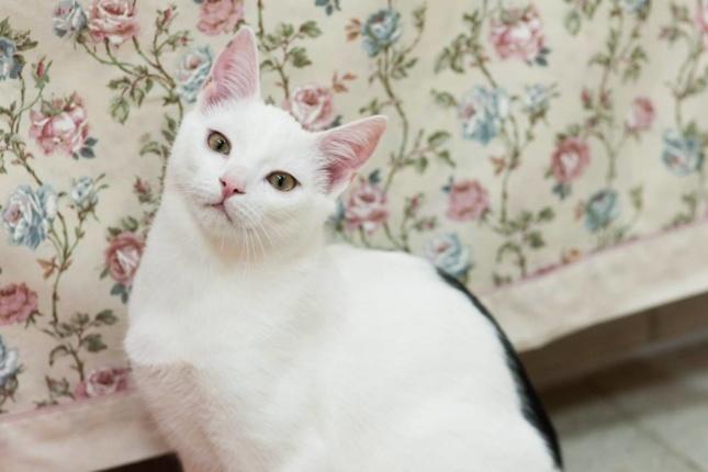 Kot do Adopcji Warszawa Albert