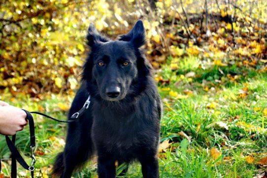 Psy do adopcji Warszawa Maxi, adoptuj: 606-854-980
