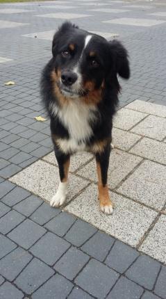 Pies Do Adopcji Gutek woj. mazowieckie, zadzwoń 606 854 980