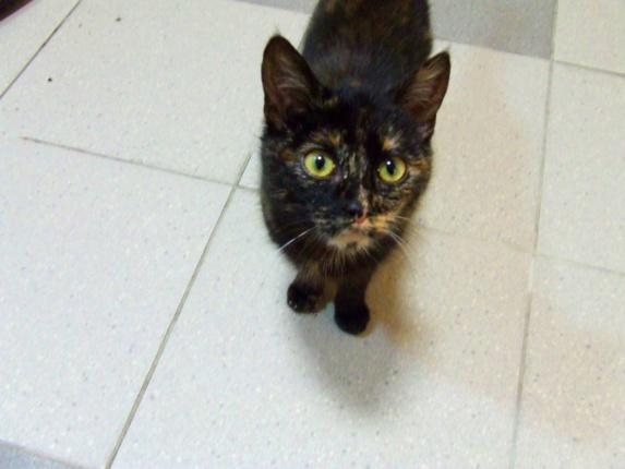 KRYSTYNKA Kot Do Adopcji