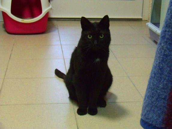 Kot Do Adopcji Mazowieckie MARYSIA