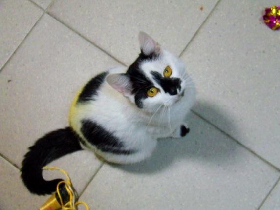 Kot Do Adopcji Warszawa JOLA