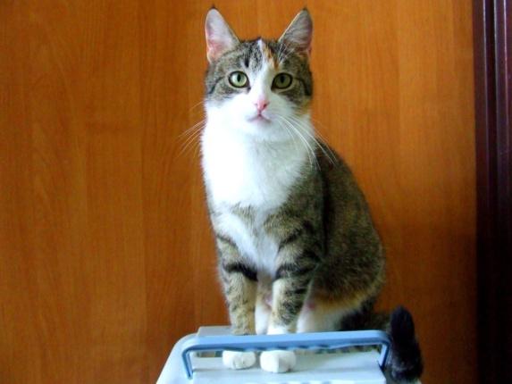 ZUZIA Kot do Adopcji