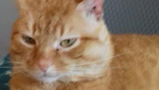 Kot Do Adopcji JAMES