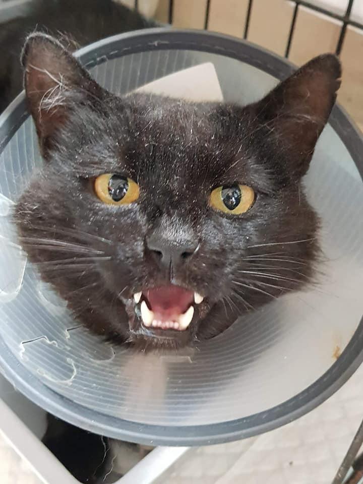 Kot Do Adopcji KLARENS