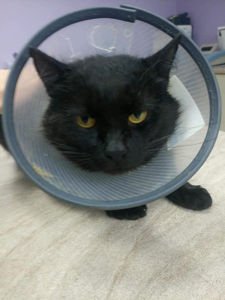 Kot Do Adopcji Warszawa KLARENS