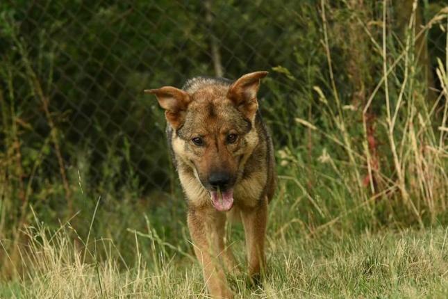 Pies Do Adopcji JAMOR