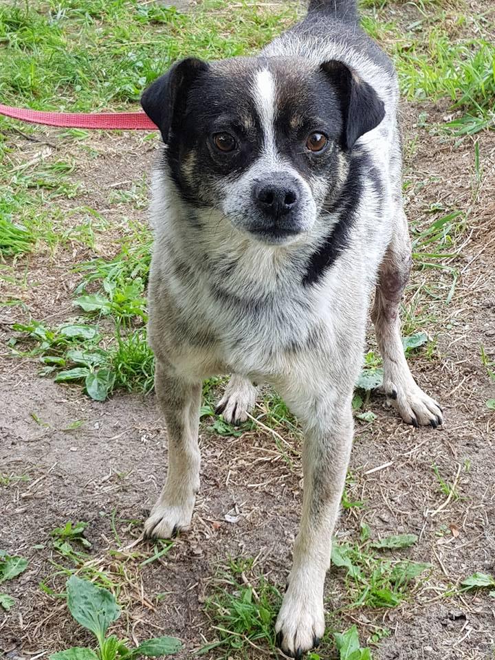 Pies Do Adopcji Warszawa Mazowieckie TAMI