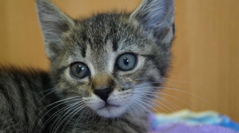 Kot Do Adopcji Filipek Mazowieckie