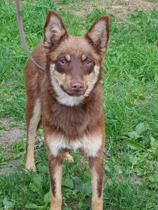 Pies Do Adopcji FIODOR