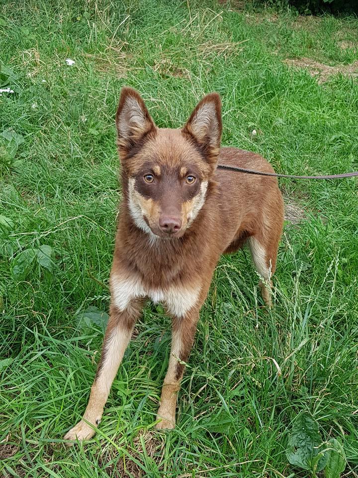 Pies Do Adopcji FIODOR Warszawa