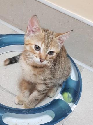 Kot Do Adopcji ALUSIA