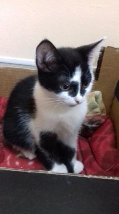 Kot Do Adopcji FRANIA
