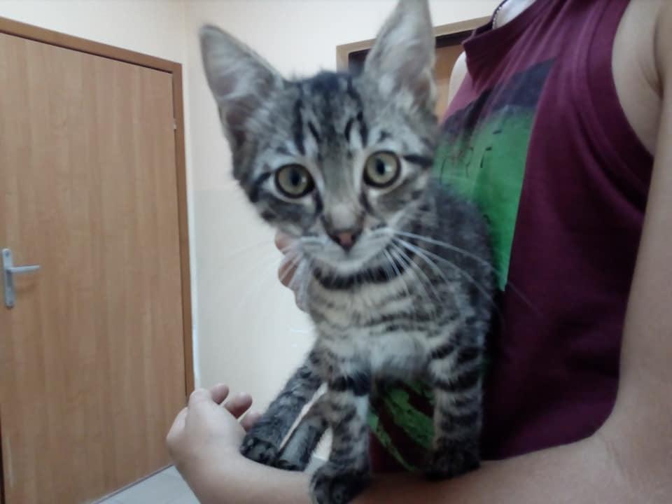 Kot Do Adopcji Warszawa