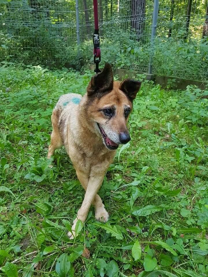 Pies do Adopcji UDINA Mazowieckie
