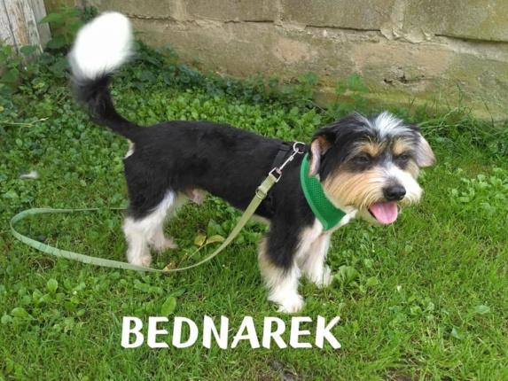 Pies do Adopcji Warszawa BEDNAREK