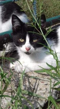 Kot do Adopcji NIUNIA