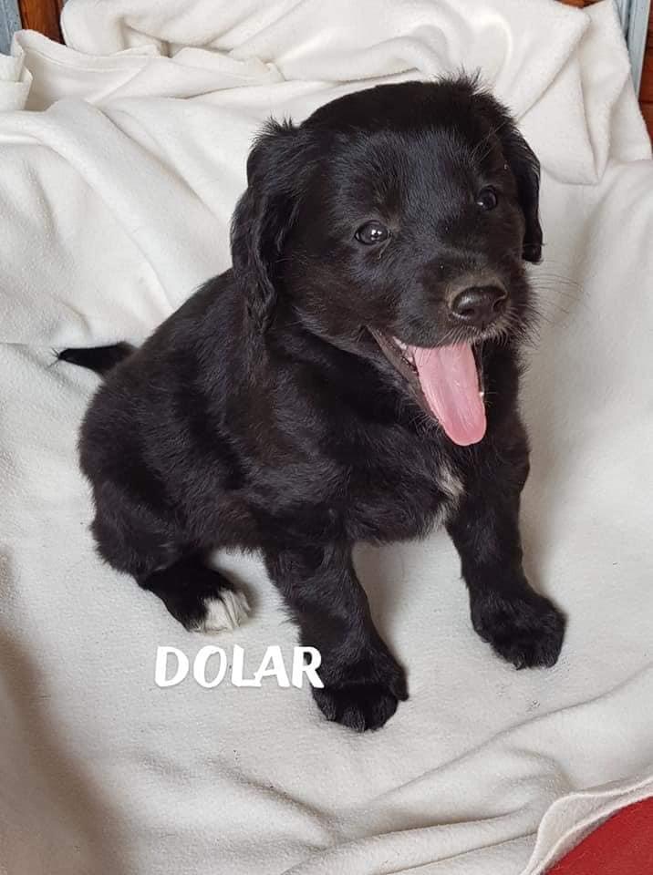 Pies Do Adopcji DOLAR