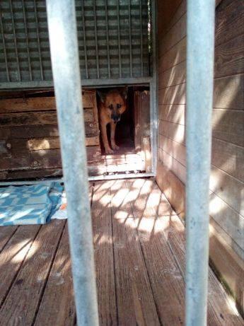 Pies Do Adopcji Werka Mazowieckie