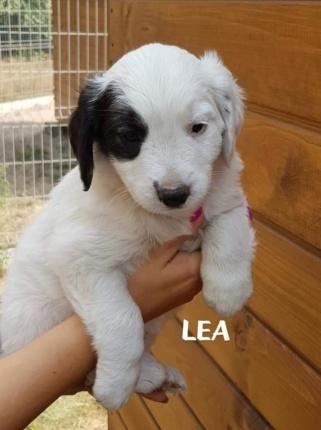 Szczeniak Do Adopcji LEA