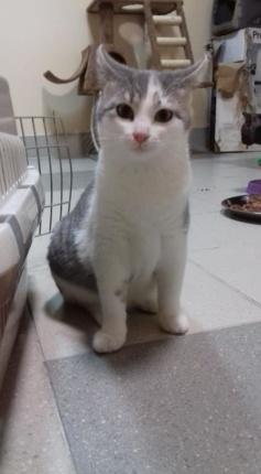 Karolinka Kot do Adopcji Warszawa Mazowieckie