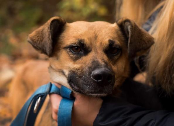 MIKI Pies Do Adopcji Warszawa
