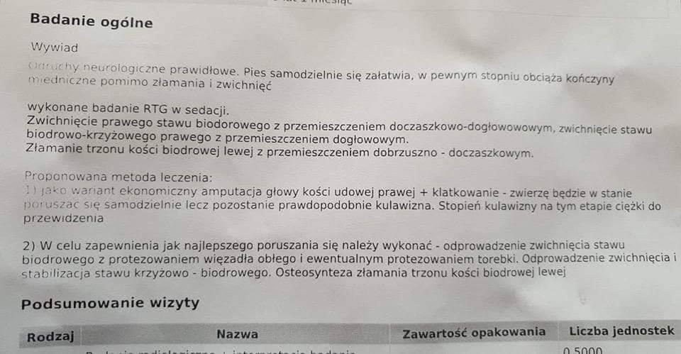 Pikolo Pies Do Adopcji Warszawa Mazowieckie