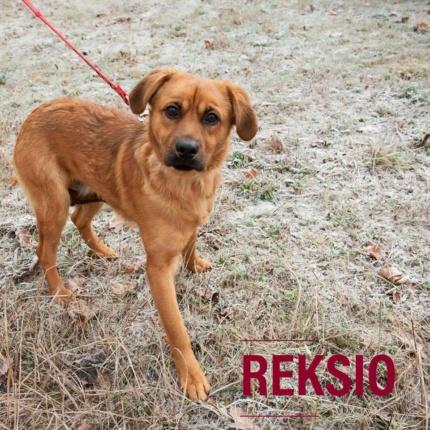 REKSIO Pies Do Adopcji Warszawa