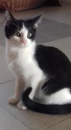 Kot Do Adopcji MARCELEK