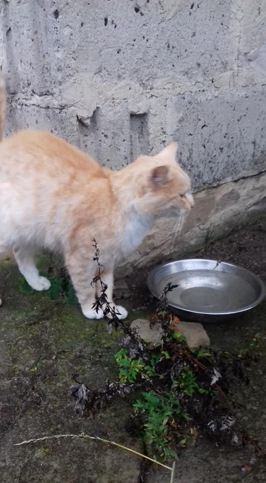 Kot Do Adopcji Warszawa LEON