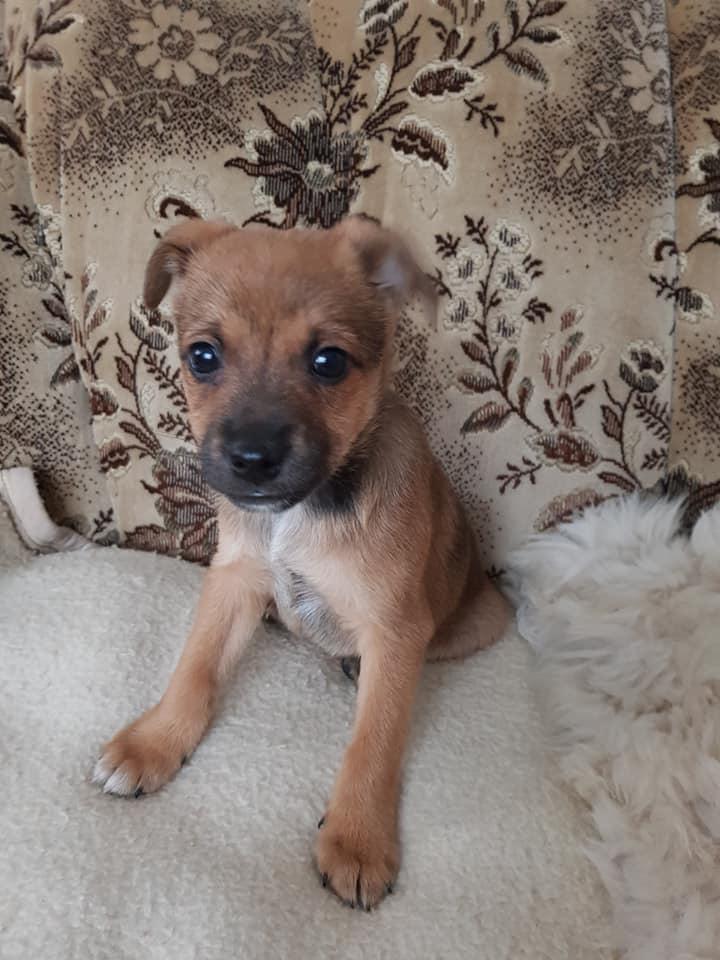Pies Do Adopcji Warszawa
