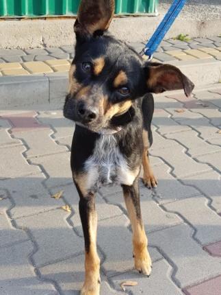 Pies Do Adopcji ZEUS